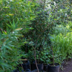 jardines-0465